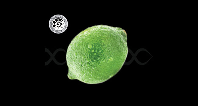 #SubLIMES #LekkerLIMES #Badhombre SEEDLESS PRESIAN LIME RoyalHalosupplierblacklist